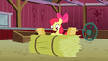 Apple Bloom looking at the RSVPs S3E08.png