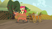 Apple Bloom riding a steer S03E08