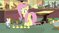 Ducklings chasing Angel Bunny S7E5.png