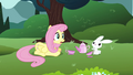 Fluttershy and Angel are disturbed S3E3.png