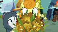 Golden Harvest looks at bouquet of marigolds S7E19