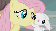 Fluttershy and Angel are back in their bodies, S9E18
