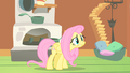 Fluttershy things going bad S1E17.png