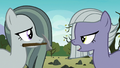 Limestone Pie tells Marble to show Pinkie S8E3.png