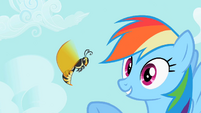 Rainbow Dash pointing at wasp S2E07
