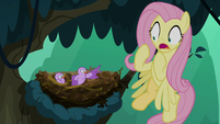 Bird chirping angrily at Fluttershy S8E13