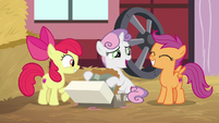 Sweetie Belle pleased to get a present S8E10