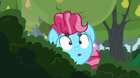 Chiffon Swirl spying through the bushes S7E13