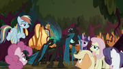 "Queen Chrysalis ""has come!"" S8E13"