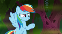 "Rainbow Dash ""uh, that is..."" S8E17"