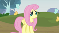 Fluttershy 'If that would help' S3E3.png