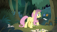 Fluttershy tries talking to the animals S8E13