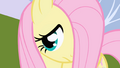 Fluttershy watches Twilight turn around and talk to Spike S1E01.png
