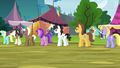 Ponies in line for oat burgers S4E22.png