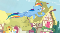 Rainbow Dash capturing coins in hoof S3E6