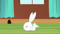 Angel Bunny falls flat on the floor S6E11.png