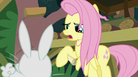 "Fluttershy ""not now, Angel"" S9E18"