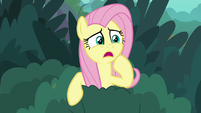 "Fluttershy ""some poor creature's in trouble!"" S8E18"
