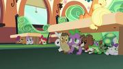 Spike, Pretendentes e mascotes se escondendo T03E12