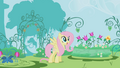 Fluttershy looking at the garden S1E3.png