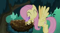 Little bird hugging Fluttershy S8E13