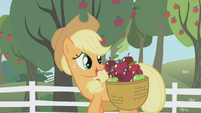 Applejack talks to Twilight as she carries apples S1E03