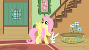 Fluttershy thanks Angel S01E22