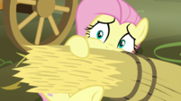 Fluttershy covering herself in hay S5E21