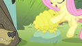 Fluttershy putting bee nest on a rock S4E14.png