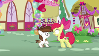 Apple Bloom asks Pip if he's Sweetie's secret admirer S8E10