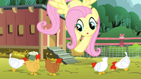 Fluttershy giving grains to chickens S4E14