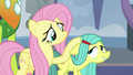 Fluttershy petting pony Ocellus S8E1.png