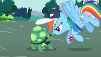 Rainbow Dash looking at Tank S2E07