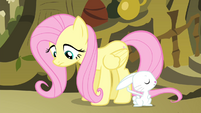 Angel and Fluttershy S4E14