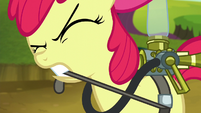 Apple Bloom straps on pest pony gear S5E4