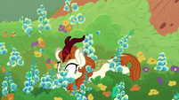 Autumn Blaze falls in a flowerbed S8E23