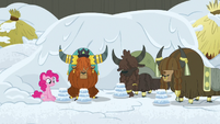 Pinkie and yaks in the new yak eating hut S7E11