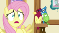 """Fluttershy """"Who am I kidding?!"""" S5E21.png"""