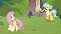 Dr. Fauna asks Fluttershy about her list S9E18