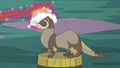 Ferret cleaning S5E3.png