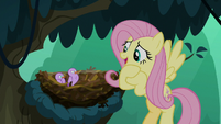 Fluttershy -I may be walking in circles- S8E13