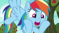 Rainbow Dash --nonstop action!-- S6E18
