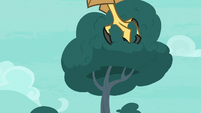 Roc digs its claws into the trees S8E11