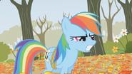 S01E13 Rainbow Dash zła na Applejack