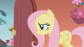 """Fluttershy """"umm actually"""" S01E07.png"""