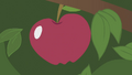Apple on a tree S01E04.png