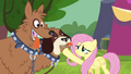 Fluttershy calming the orthros S4E22.png