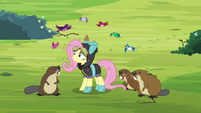 Animals surrounding Fluttershy S3E05