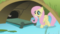 Fluttershy bringing fish to ferrets S1E07.png