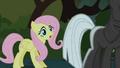 Fluttershy finds Twilight S01E17.png